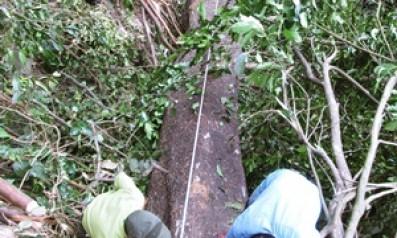 Bắt quả tang bốn đối tượng khai thác gỗ trái phép
