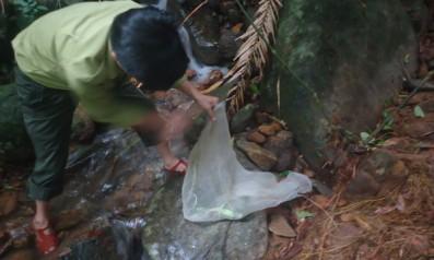 Vườn quốc gia Bạch Mã tái thả 09 cá thể Rồng đất về với môi trường tự nhiên