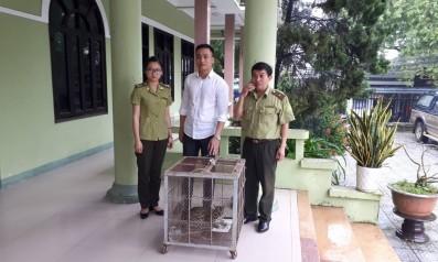 Vườn quốc gia Bạch Mã tiếp nhân cá thể Mèo rừng từ Chi cục Kiểm lâm tỉnh Thừa Thiên Huế do người dân hiến tặng
