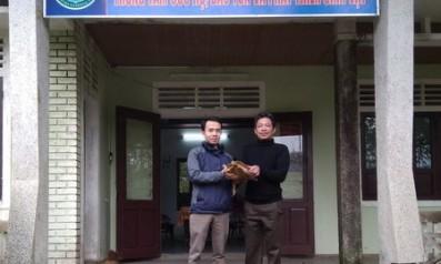 Trung tâm Cứu hộ, bảo tồn và phát triển sinh vật Vườn quốc gia Bạch Mã tiếp nhận cá thể Rùa núi viền từ người dân tình nguyện bàn giao